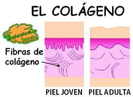 colageno-piel