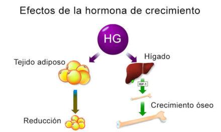 HGH Hormona de crecimiento