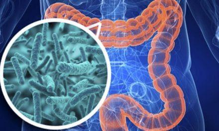 Los probioticos y su beneficio para la salud