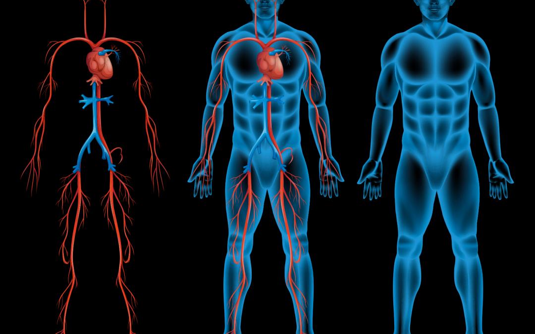Mala circulación sanguínea